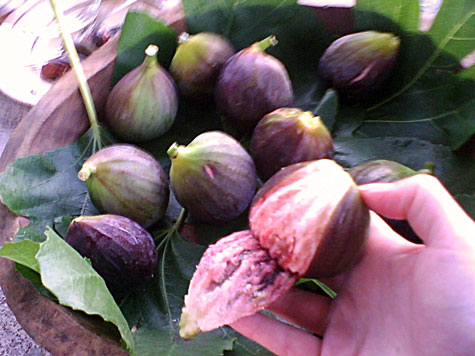 Fresh organic figs from Montefalco, Umbria
