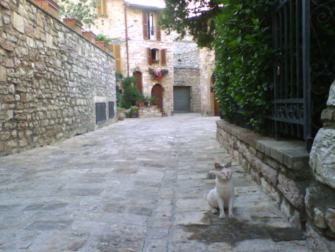 A rather holy blind cat I met in Assisi